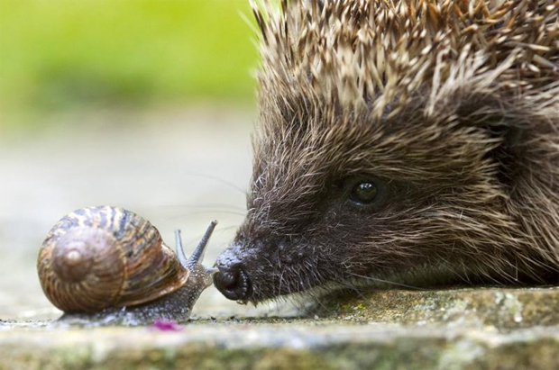 Hedgehog and Snail