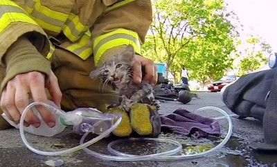 The Incredible Moment When a Fireman Saves Tiny Kitten from a House Fire